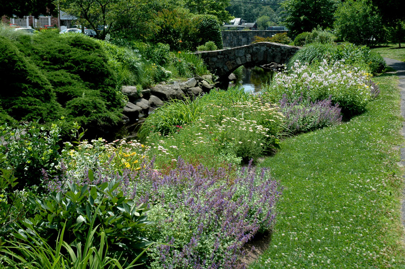 streamside border in neighborhood park
