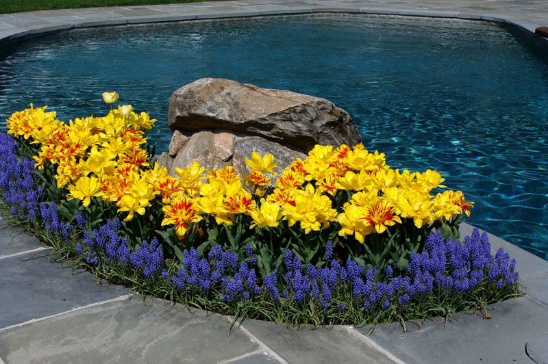 Spring bed at pool