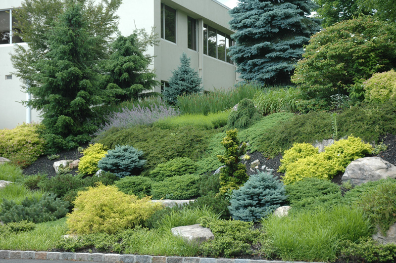 Maher Amp Greenwald Fine Gardens Slopes And Rock Gardens